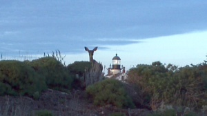 Black tailed coastal deer by the Pinos Point Lighthouse